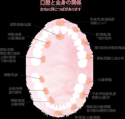 SEIDA式歯ぐきマッサージ